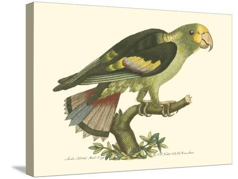 Black-Winged Parakeet--Stretched Canvas Print