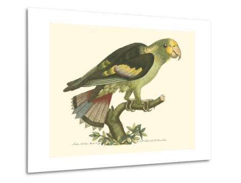 Black-Winged Parakeet--Metal Print