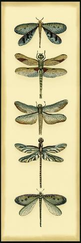 Small Dragonfly Collector I-Chariklia Zarris-Stretched Canvas Print
