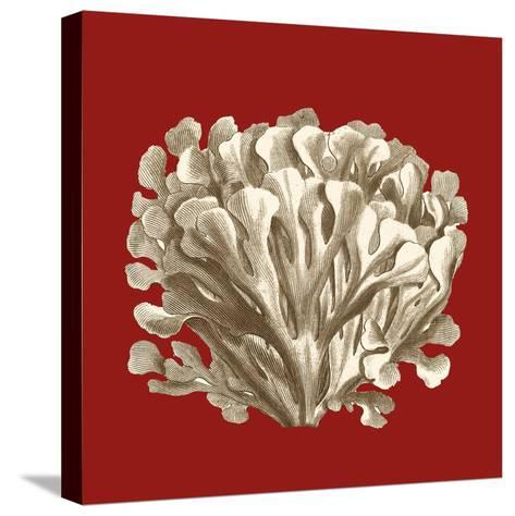 Small Coral on Red III-Vision Studio-Stretched Canvas Print