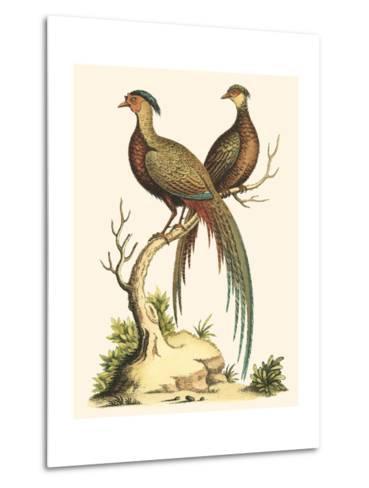 Small Regal Pheasants II-George Edwards-Metal Print