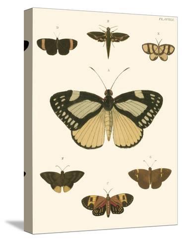 Small Heirloom Butterflies II-Pieter Cramer-Stretched Canvas Print