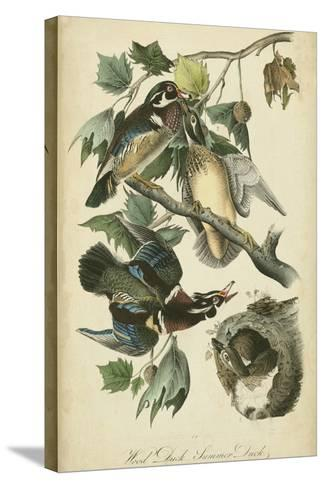 Audubon Wood Duck-John James Audubon-Stretched Canvas Print