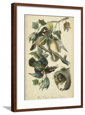 Audubon Wood Duck-John James Audubon-Framed Art Print