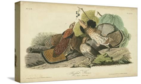 Audubon Ruffed Grouse-John James Audubon-Stretched Canvas Print