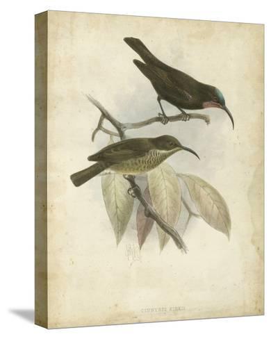 Antique Gould Hummingbird I-John Gould-Stretched Canvas Print
