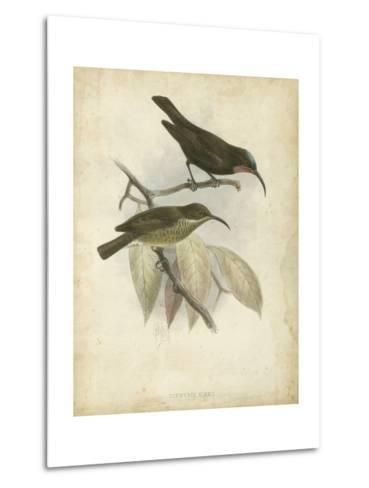 Antique Gould Hummingbird I-John Gould-Metal Print