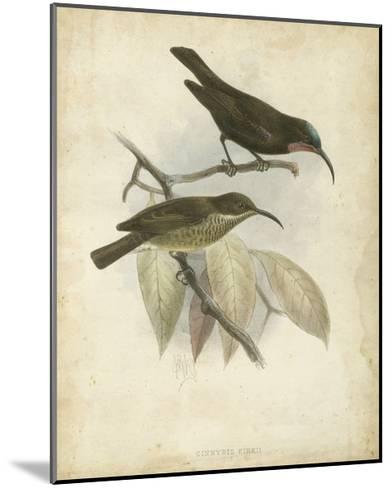 Antique Gould Hummingbird I-John Gould-Mounted Art Print