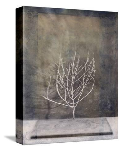 Desert Form II-Elena Ray-Stretched Canvas Print