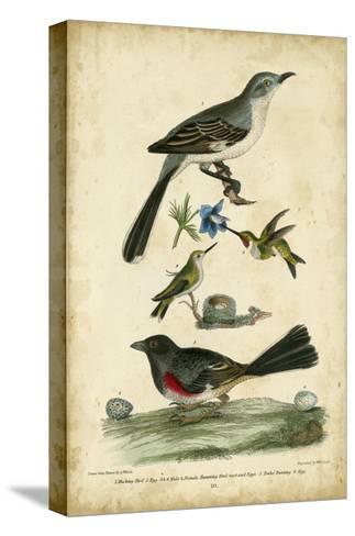 Wilson's Mockingbird-Alexander Wilson-Stretched Canvas Print