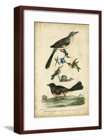 Wilson's Mockingbird-Alexander Wilson-Framed Art Print