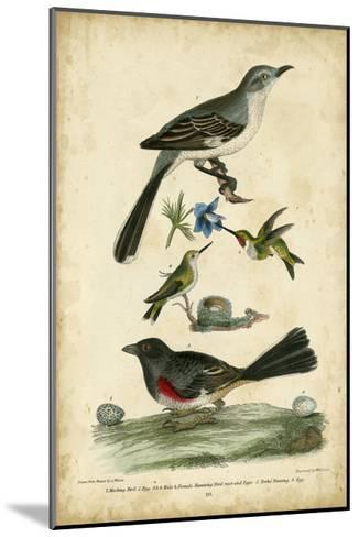 Wilson's Mockingbird-Alexander Wilson-Mounted Art Print