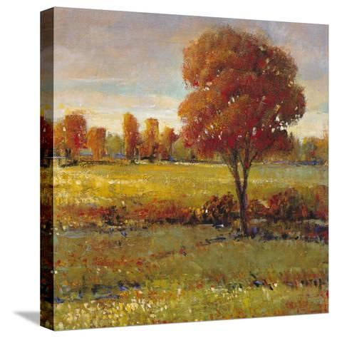 Field in Fall-Tim O'toole-Stretched Canvas Print