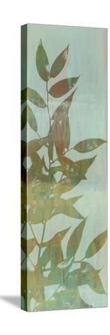 Leaf Overlay I-Jennifer Goldberger-Stretched Canvas Print