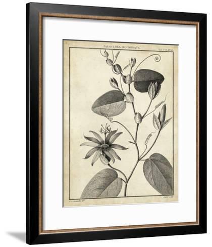Passiflora VI-Charles Francois Sellier-Framed Art Print