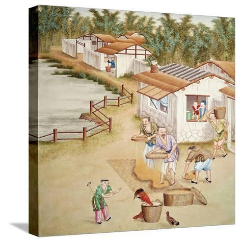 Chinese Farmers Sieving Rice--Stretched Canvas Print