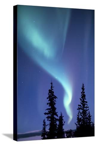 The Aurora Borealis, or Northern Lights, over Silhouetted Evergreen Trees-Ira Meyer-Stretched Canvas Print