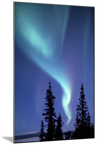 The Aurora Borealis, or Northern Lights, over Silhouetted Evergreen Trees-Ira Meyer-Mounted Photographic Print
