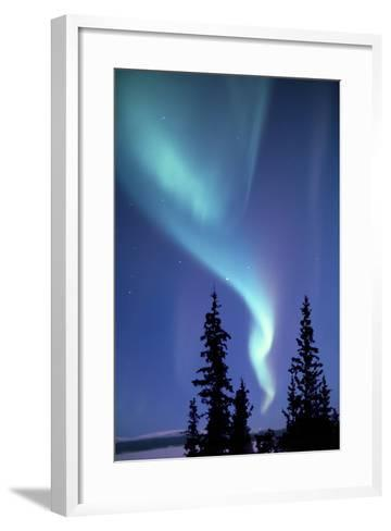 The Aurora Borealis, or Northern Lights, over Silhouetted Evergreen Trees-Ira Meyer-Framed Art Print