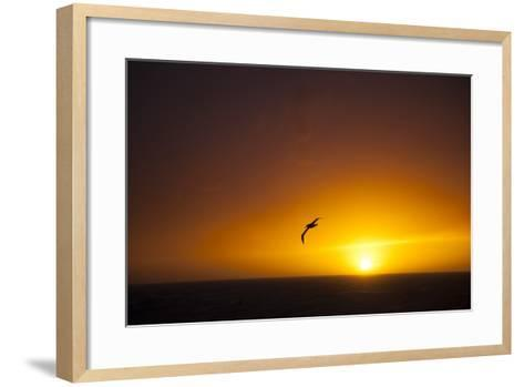 A Wandering Albatross at Sunset Near Elephant Island, Scotia Sea, Antarctica-Michael Melford-Framed Art Print