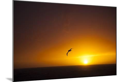 A Wandering Albatross at Sunset Near Elephant Island, Scotia Sea, Antarctica-Michael Melford-Mounted Photographic Print