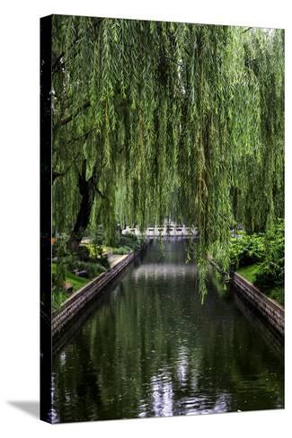 The Branches of a Weeping Willow Tree, Salix Babylonica, Hanging over a Calm Waterway-Jonathan Irish-Stretched Canvas Print