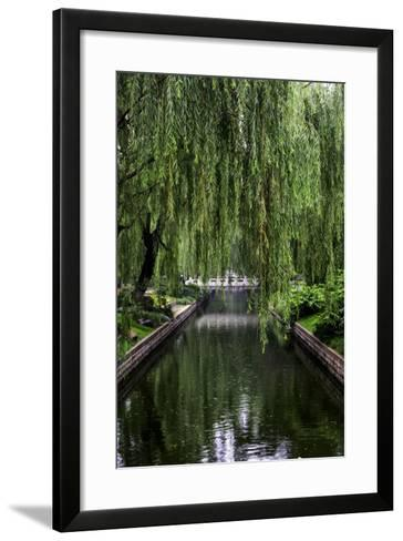 The Branches of a Weeping Willow Tree, Salix Babylonica, Hanging over a Calm Waterway-Jonathan Irish-Framed Art Print
