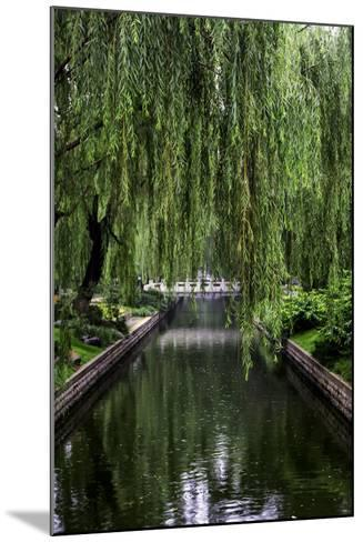 The Branches of a Weeping Willow Tree, Salix Babylonica, Hanging over a Calm Waterway-Jonathan Irish-Mounted Photographic Print
