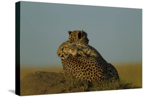 A Juvenile Cheetah, Acinonyx Jubatus, Lies Draped over the Side of its Mother on a Dirt Mound-Beverly Joubert-Stretched Canvas Print