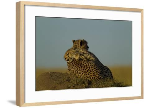 A Juvenile Cheetah, Acinonyx Jubatus, Lies Draped over the Side of its Mother on a Dirt Mound-Beverly Joubert-Framed Art Print