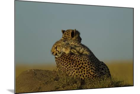 A Juvenile Cheetah, Acinonyx Jubatus, Lies Draped over the Side of its Mother on a Dirt Mound-Beverly Joubert-Mounted Photographic Print