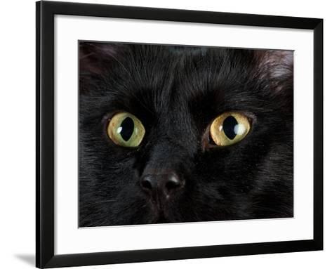 Studio Portrait of a Cat Named Amadeus Wolfgang Meowzart-Joel Sartore-Framed Art Print