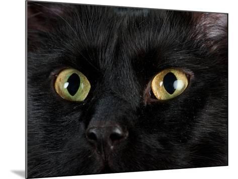 Studio Portrait of a Cat Named Amadeus Wolfgang Meowzart-Joel Sartore-Mounted Photographic Print