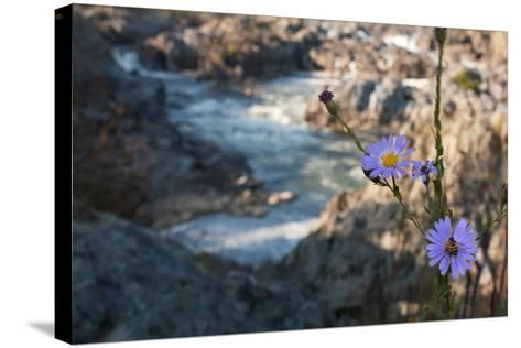 Wildflowers Above the Rapids of Great Falls on the Potomac River-Vickie Lewis-Stretched Canvas Print