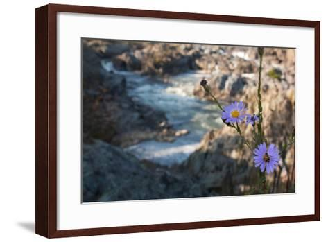 Wildflowers Above the Rapids of Great Falls on the Potomac River-Vickie Lewis-Framed Art Print