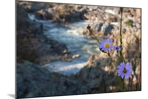 Wildflowers Above the Rapids of Great Falls on the Potomac River-Vickie Lewis-Mounted Photographic Print