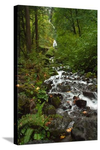 Stream Near Multnomah Falls in Oregon's Columbia River Gorge-Vickie Lewis-Stretched Canvas Print