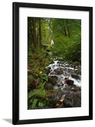 Stream Near Multnomah Falls in Oregon's Columbia River Gorge-Vickie Lewis-Framed Art Print