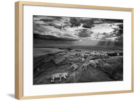 Lionesses and cubs from the Vumbi lion pride rest on a kopje, a rocky outcrop.-Michael Nichols-Framed Art Print