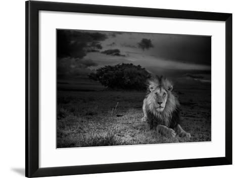 A Dark-Maned Male Lion known as C-Boy-Michael Nichols-Framed Art Print