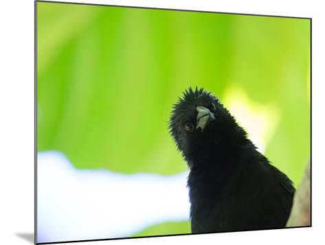 A Crow Stares at the Camera with Great Curiosity-Alex Saberi-Mounted Photographic Print