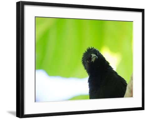 A Crow Stares at the Camera with Great Curiosity-Alex Saberi-Framed Art Print