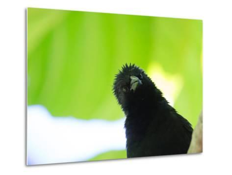 A Crow Stares at the Camera with Great Curiosity-Alex Saberi-Metal Print