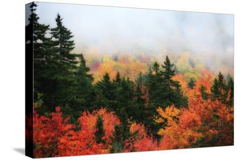 A Forest in Brilliant Autumn Hues Colors the Landscape Beneath a Thick Fog-Robbie George-Stretched Canvas Print