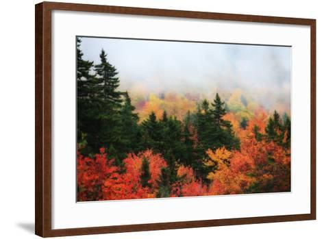 A Forest in Brilliant Autumn Hues Colors the Landscape Beneath a Thick Fog-Robbie George-Framed Art Print