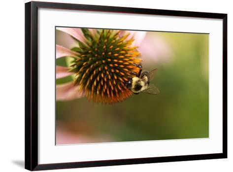 A Bee on a Coneflower-Vickie Lewis-Framed Art Print