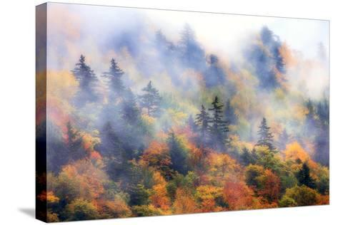Fog over a Forested Hillside in New England Fall Colors-Robbie George-Stretched Canvas Print
