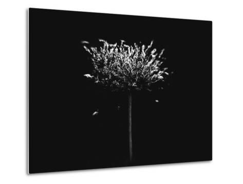 A Small Solitary Tree-Henriette Lund Mackey-Metal Print