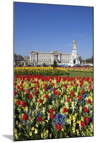 Buckingham Palace and Queen Victoria Monument with Tulips, London, England, United Kingdom, Europe-Stuart Black-Mounted Photographic Print
