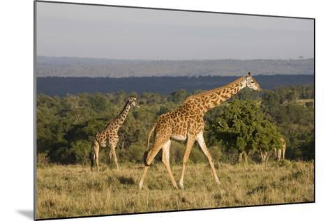 Masai Giraffe (Giraffa Camelopardalis Tippelskirchi)-Angelo Cavalli-Mounted Photographic Print